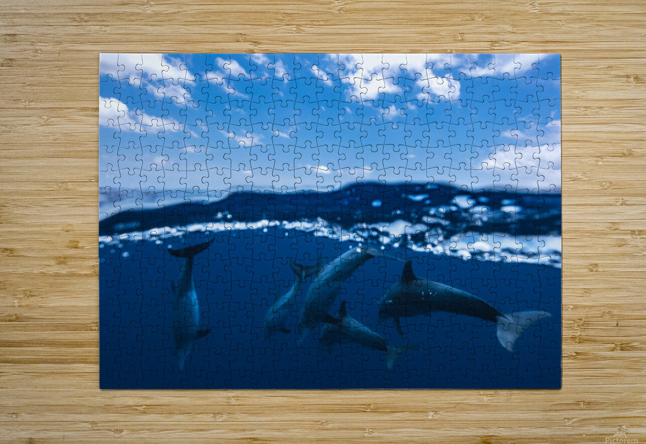 Between air and water with the dolphins  HD Metal print with Floating Frame on Back