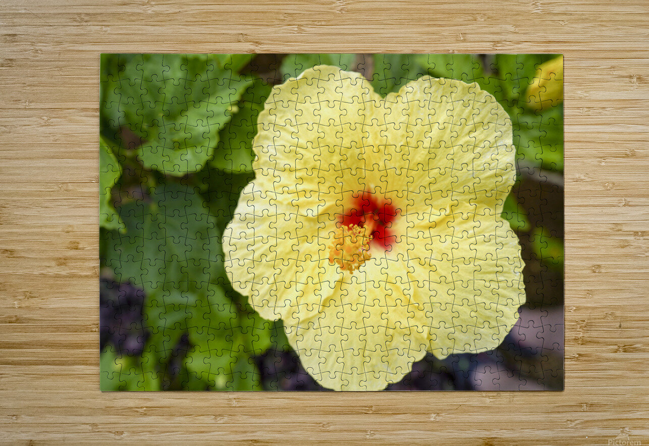 Yellow Hibiscus Tropical Flower Hawaii  HD Metal print with Floating Frame on Back