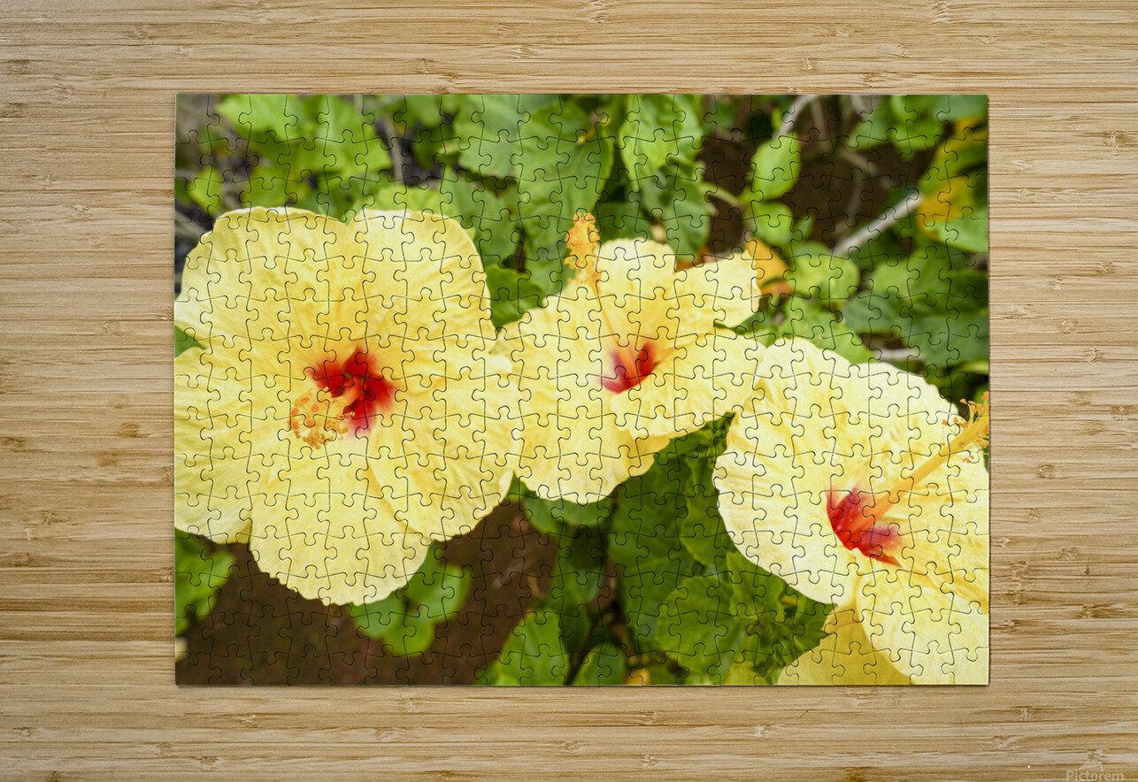 Hibiscus Trio   Tropical Flowers Hawaii  HD Metal print with Floating Frame on Back
