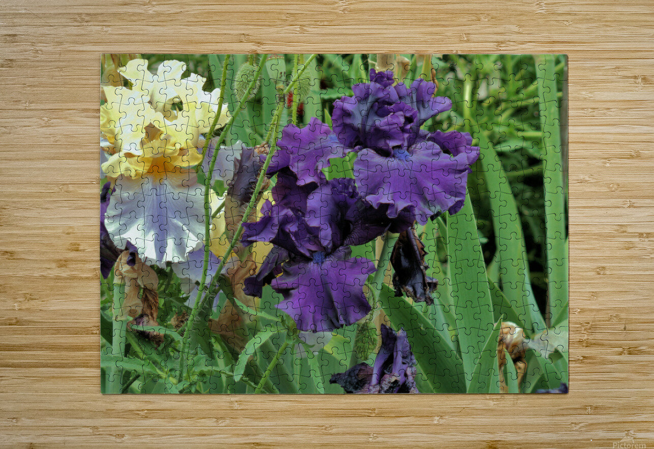 Two Iris  HD Metal print with Floating Frame on Back
