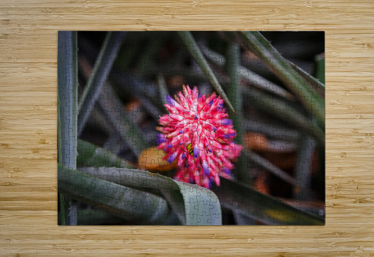 The Color Of Life  HD Metal print with Floating Frame on Back