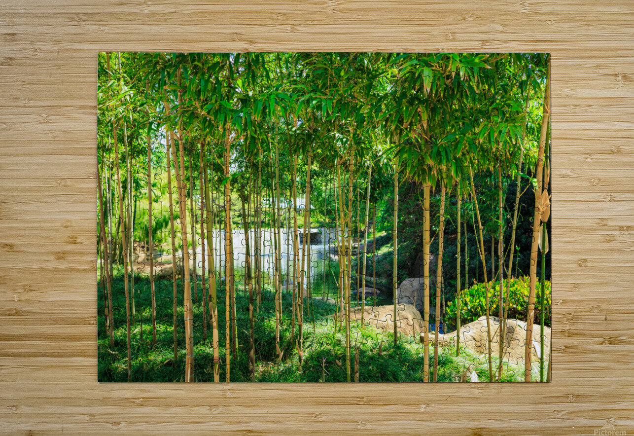 Bamboo  HD Metal print with Floating Frame on Back