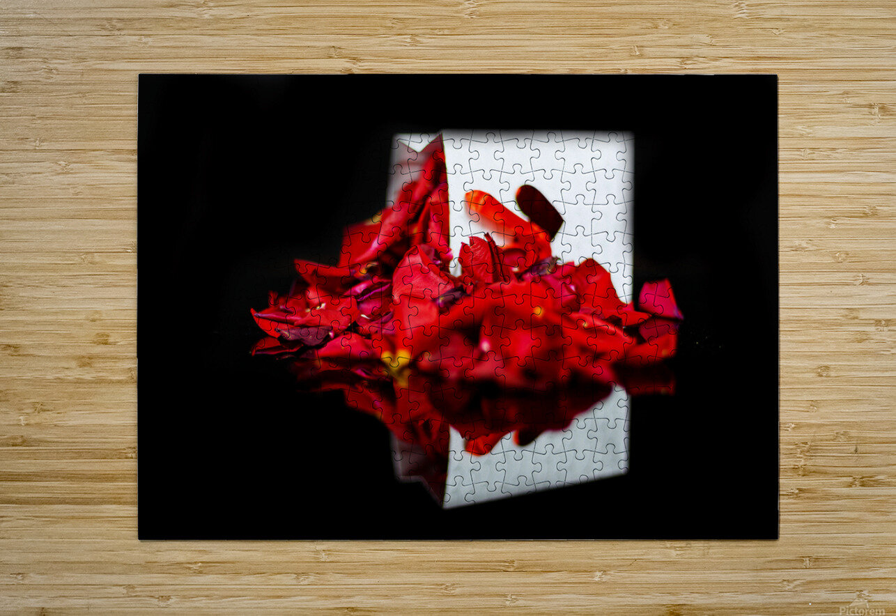 Rose Petals  HD Metal print with Floating Frame on Back