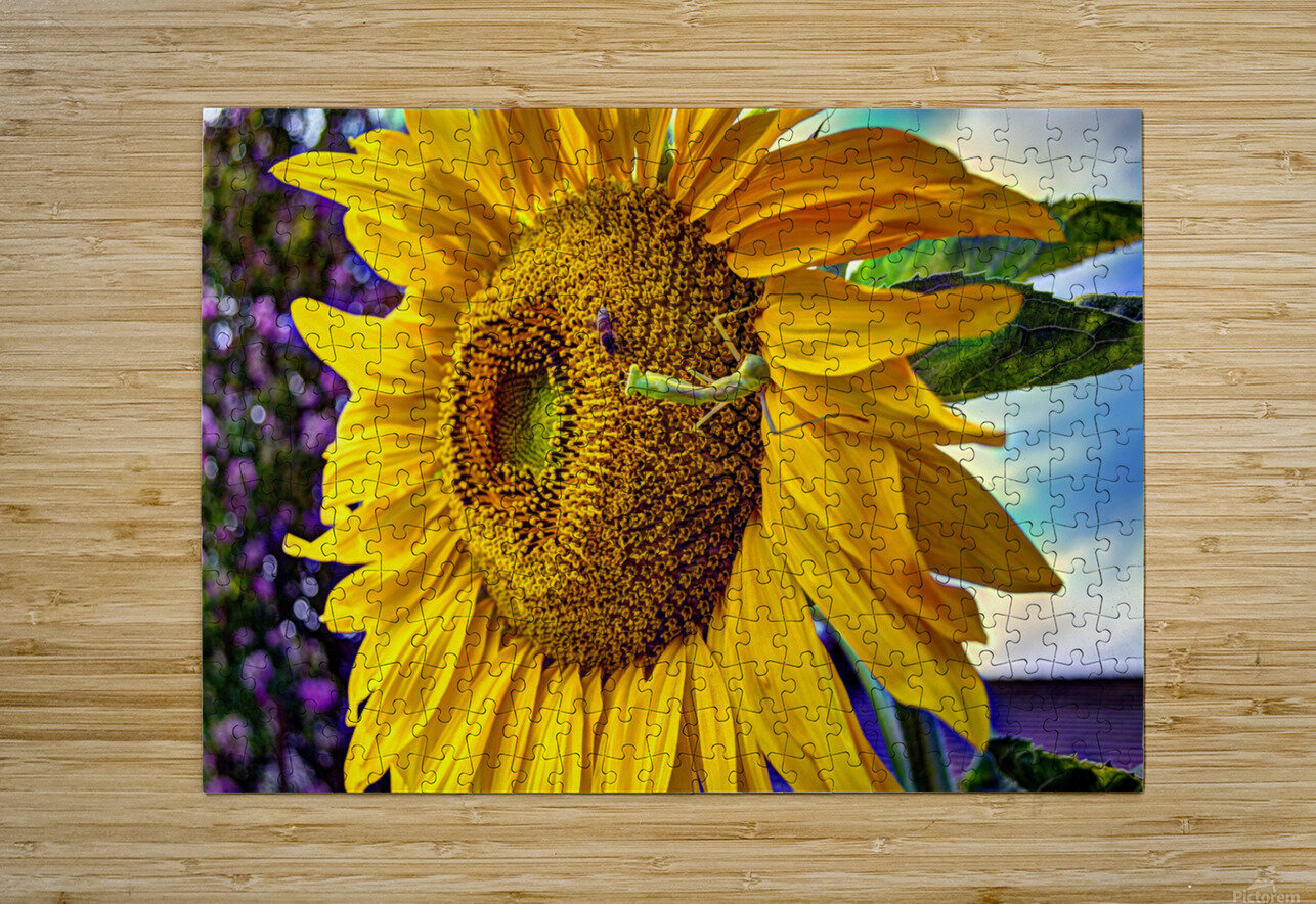 Sunflower Creative  HD Metal print with Floating Frame on Back
