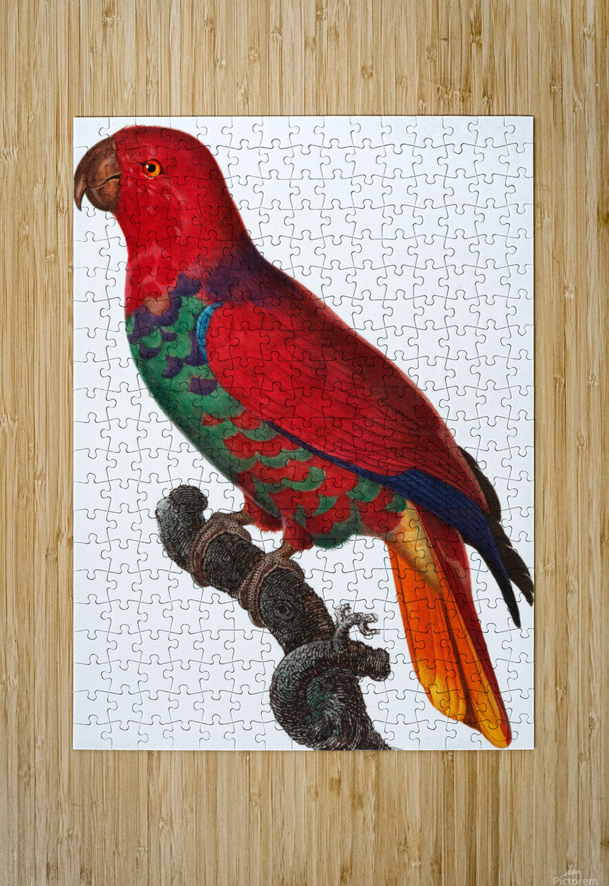 Parrot Print Antique Space Painting Vintage Drawing Poster Wall Art Eclectus Parrot Vintage parrot print Parrot Poster Print   HD Metal print with Floating Frame on Back