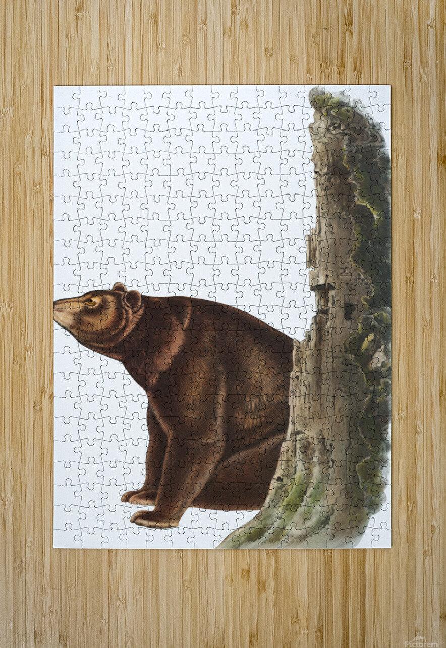 Bear Print  HD Metal print with Floating Frame on Back