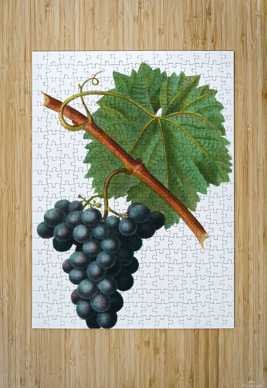 Grape Spanna Antique Art Kitchen Art Grapes Vintage Grapes Pic Grape Vine Grape Leaves Winery Spanna Grapes Wine Blued 02Element 3  HD Metal print with Floating Frame on Back