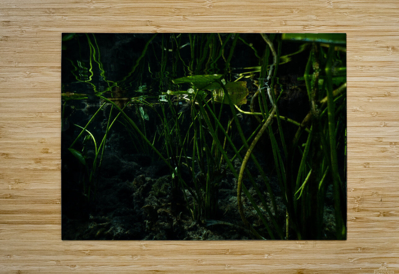 Reflecting Lily  HD Metal print with Floating Frame on Back