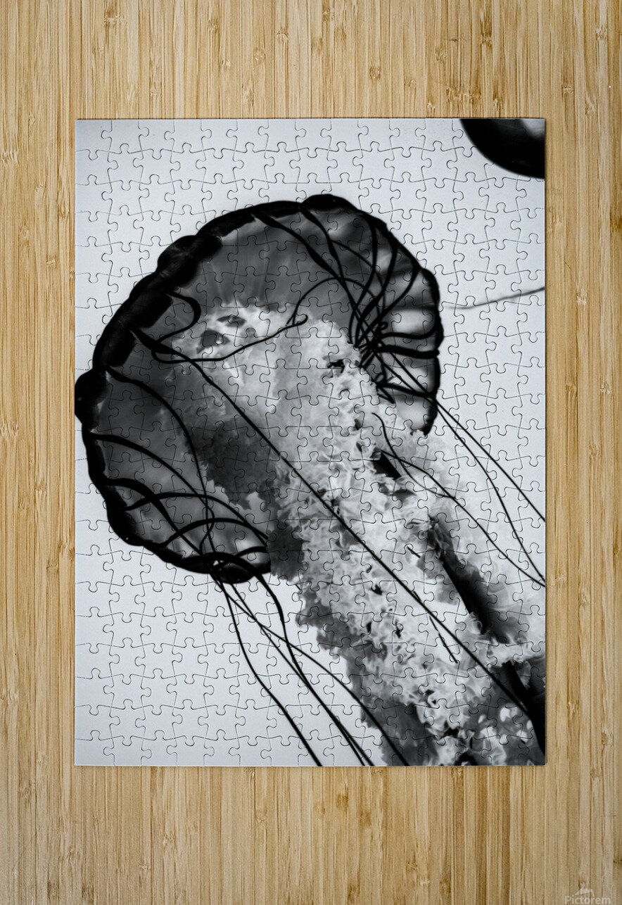 B&W Jelly  HD Metal print with Floating Frame on Back