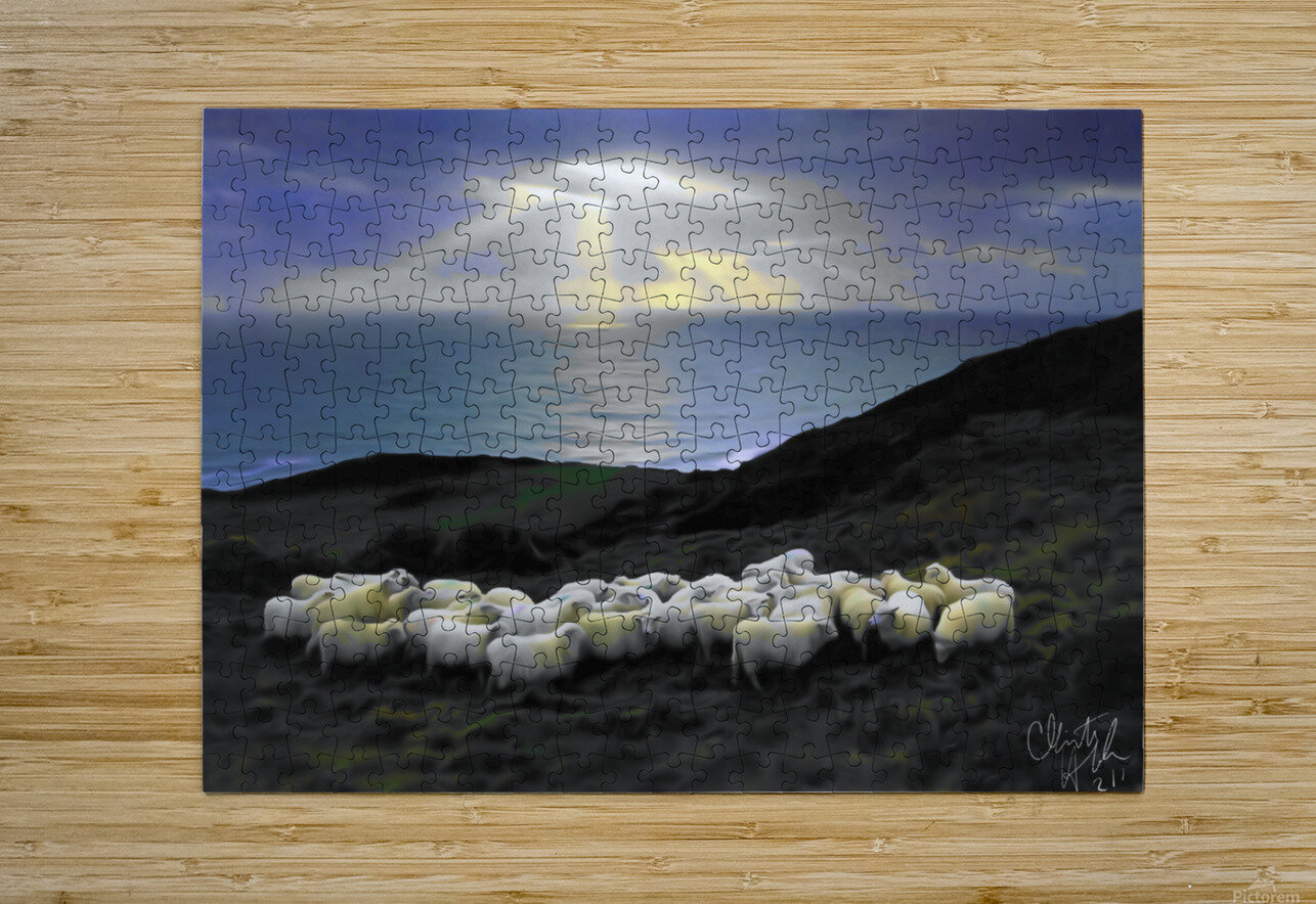 Sheep grazing  HD Metal print with Floating Frame on Back