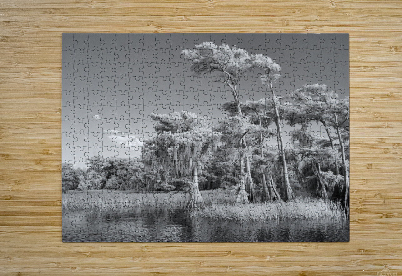 Blue cypress trees horizontal  HD Metal print with Floating Frame on Back