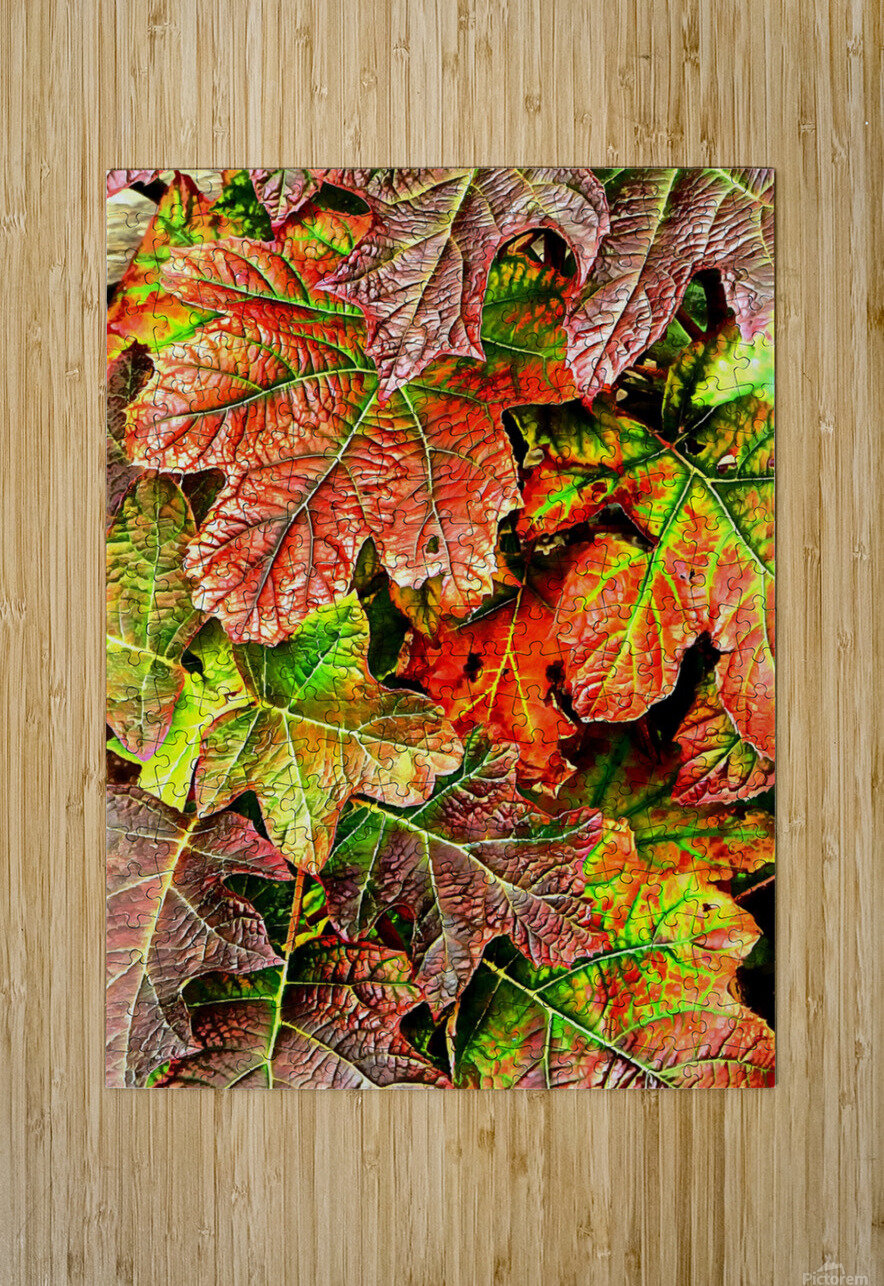 Oak Leaved Hydrangea In Autumn  HD Metal print with Floating Frame on Back