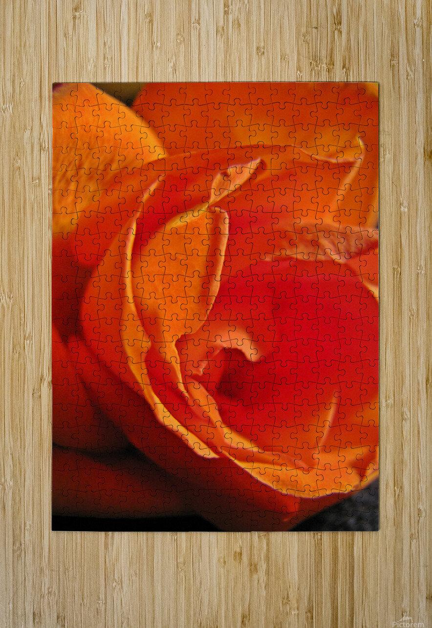 Passion Flower  Impression métal HD avec cadre flottant sur le dos