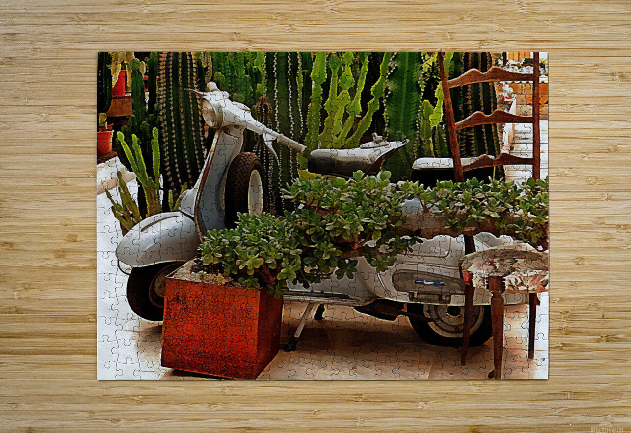Vespa As Part Of Succulent Display  HD Metal print with Floating Frame on Back