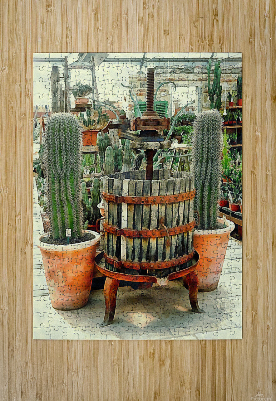 Old Wine Press Used in Succulent Display  HD Metal print with Floating Frame on Back