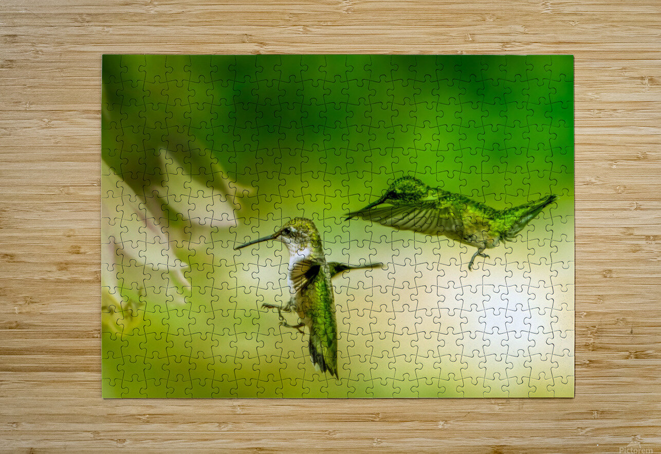 Emerald Hummingbirds  HD Metal print with Floating Frame on Back