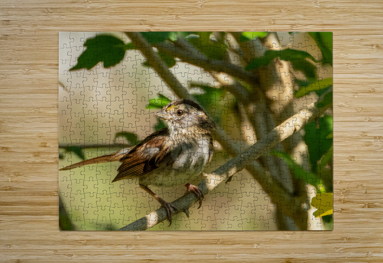 Sparrow  HD Metal print with Floating Frame on Back