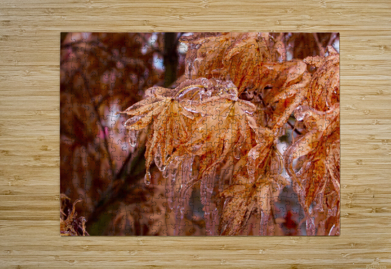 Maple Leaves  HD Metal print with Floating Frame on Back