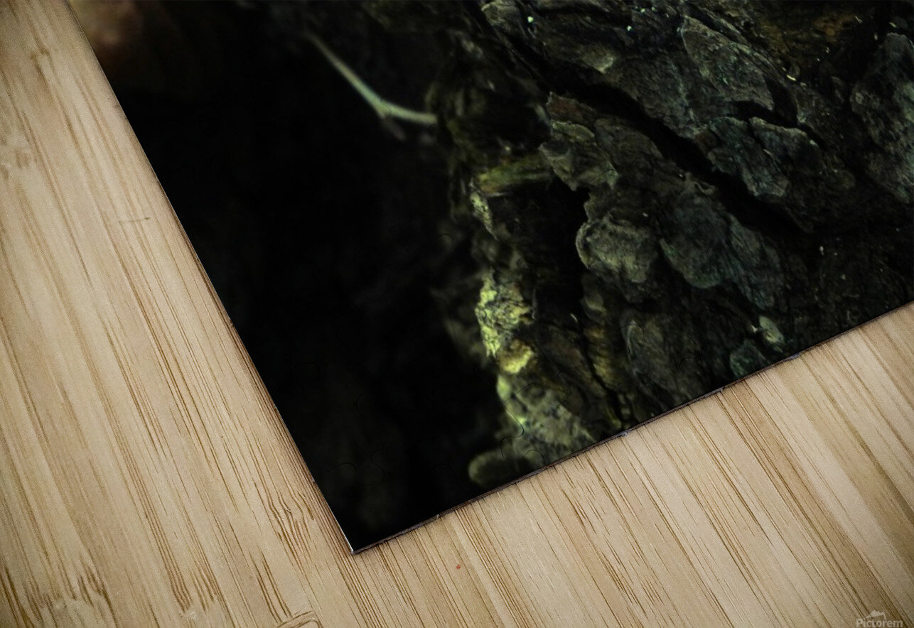 sofn-87599475 HD Sublimation Metal print