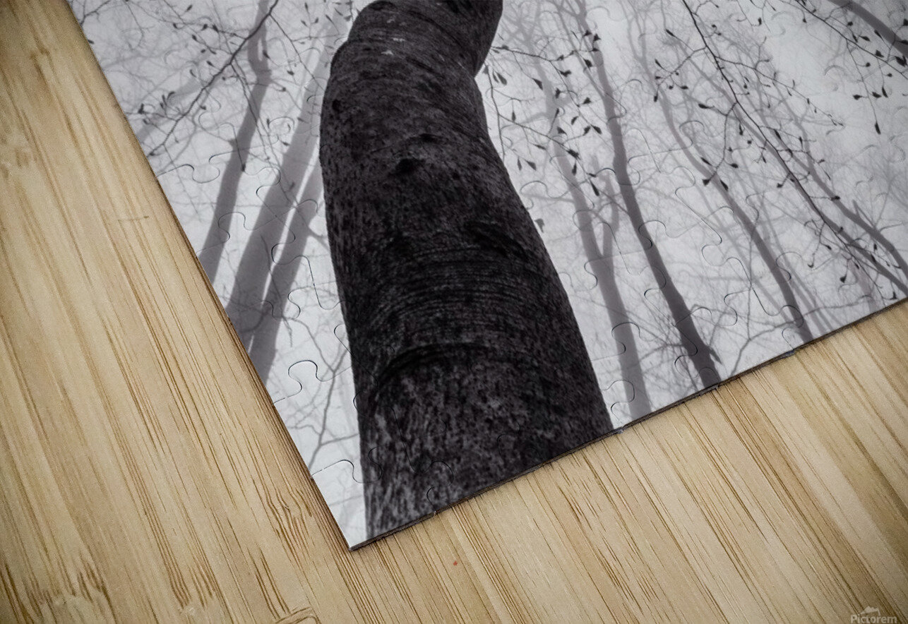 A view of the tree crown HD Sublimation Metal print