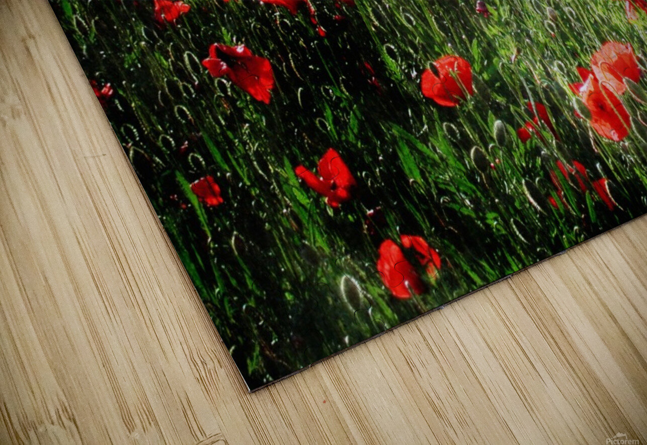 Rolling Fields with Poppies HD Sublimation Metal print