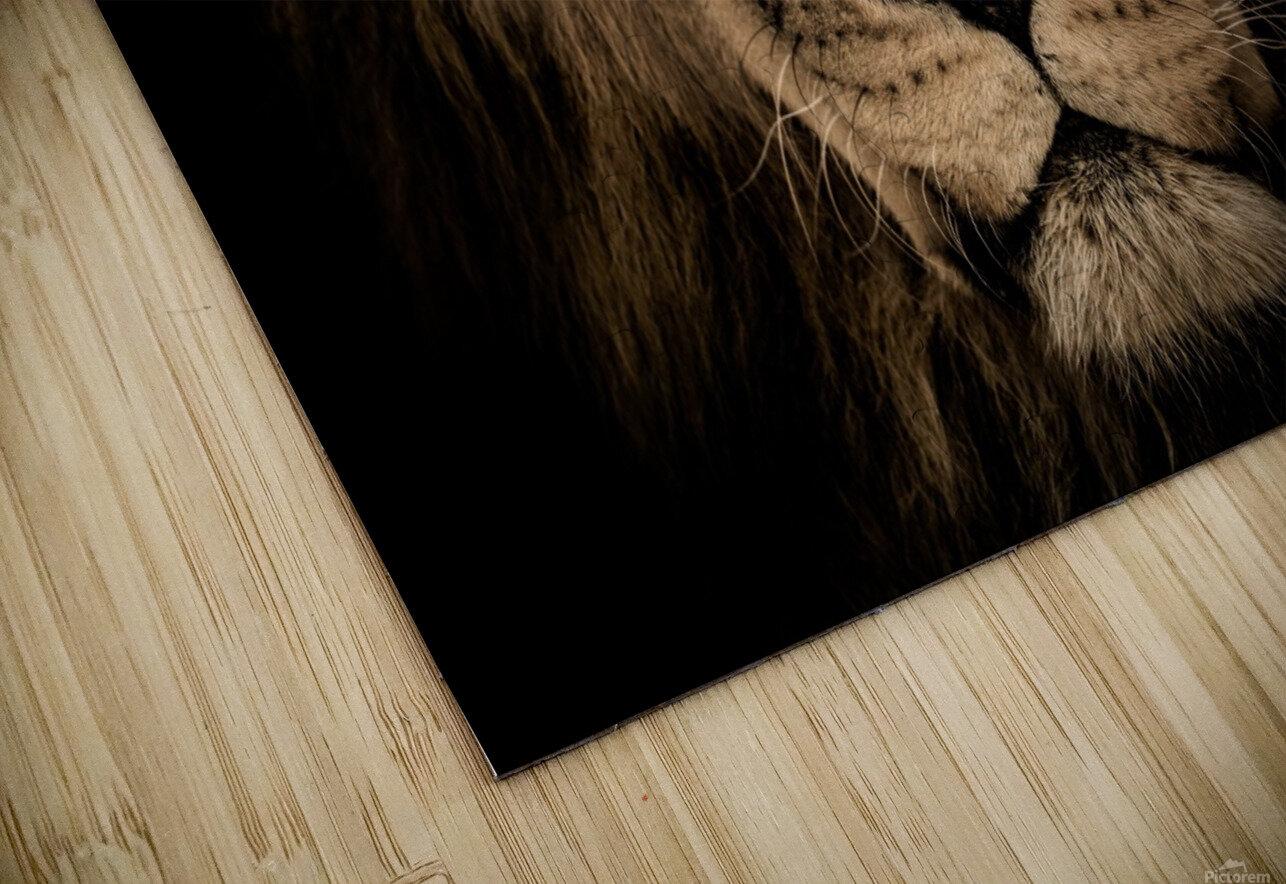 african lion wildcat mane closeup HD Sublimation Metal print