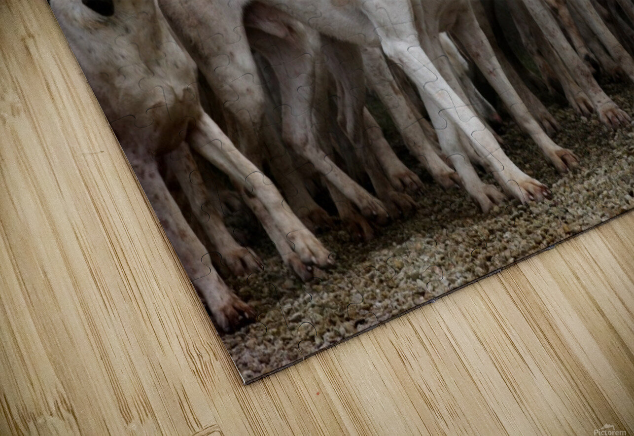 dog herd canine animal pet hounds HD Sublimation Metal print