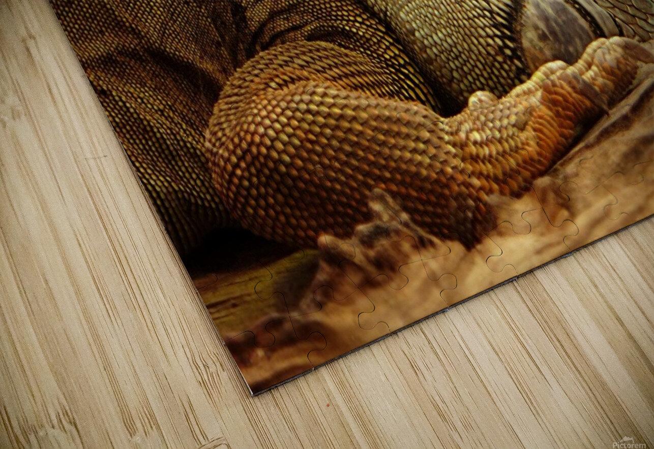 animal reptile lizard iguana HD Sublimation Metal print