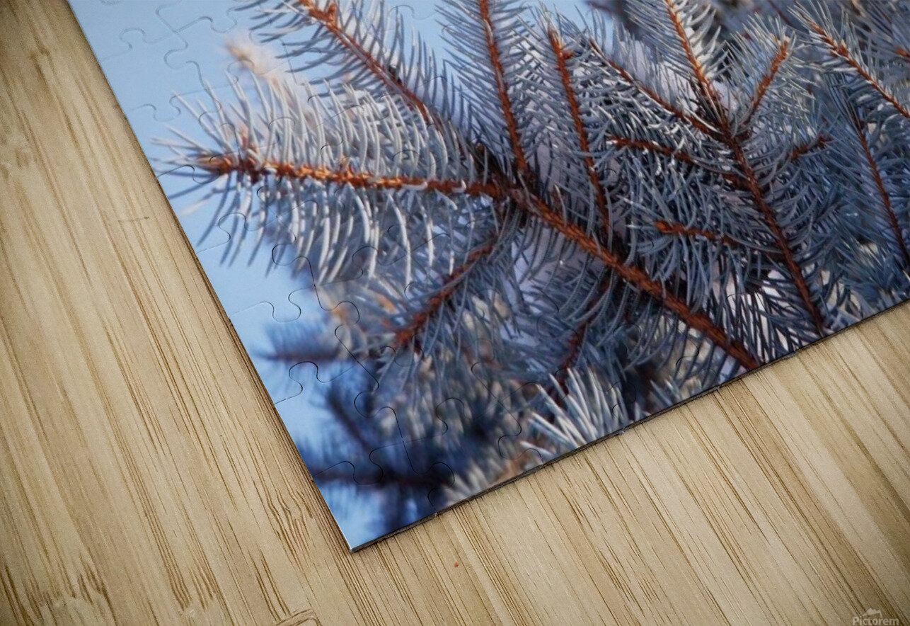 Winter Pines HD Sublimation Metal print