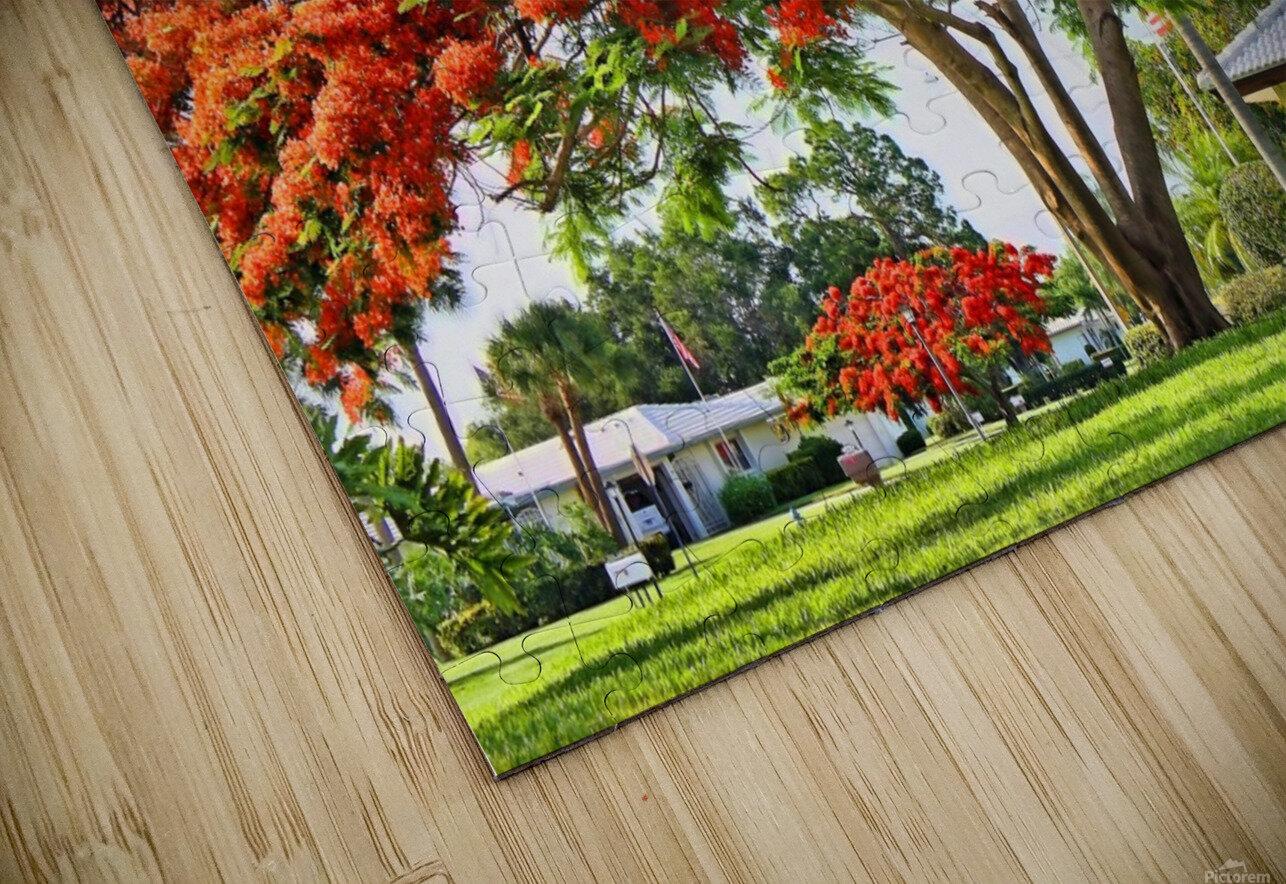 Royal Poinciana Tree HD Sublimation Metal print
