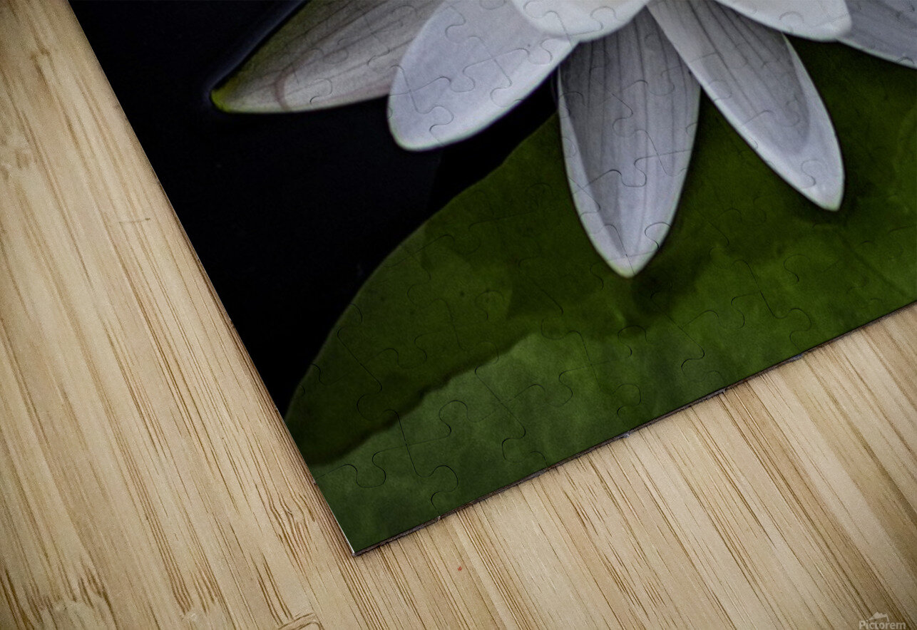 LIly HD Sublimation Metal print