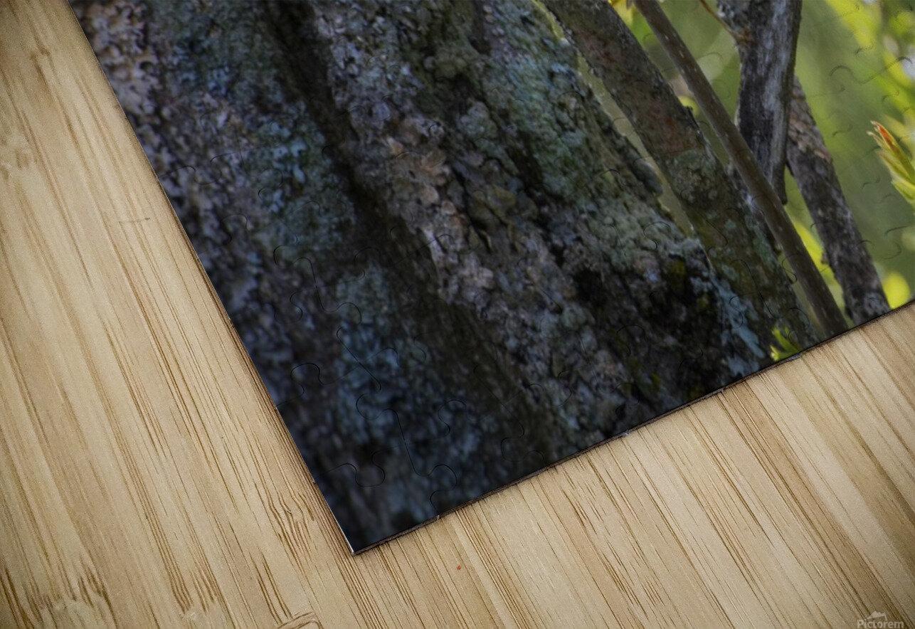 Ent HD Sublimation Metal print