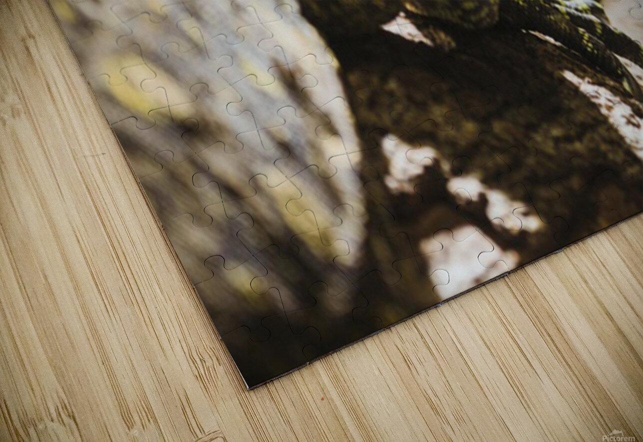 komodo dragon HD Sublimation Metal print