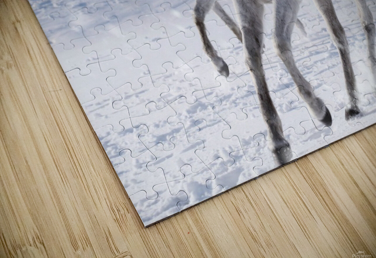 Horses in the Snow HD Sublimation Metal print