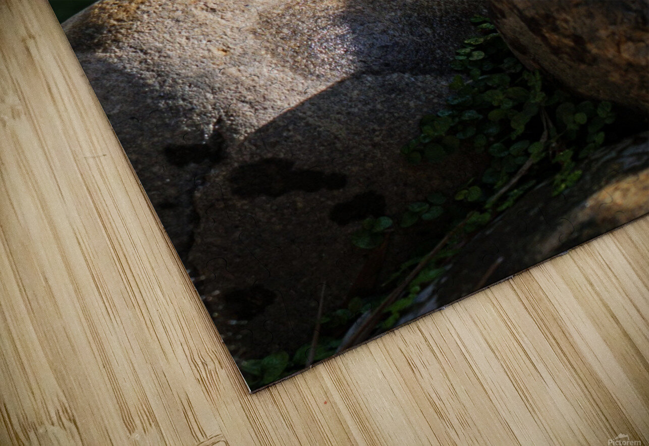 Quacking Duckling HD Sublimation Metal print