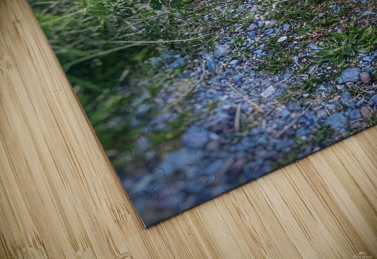 Sunset bunny HD Sublimation Metal print