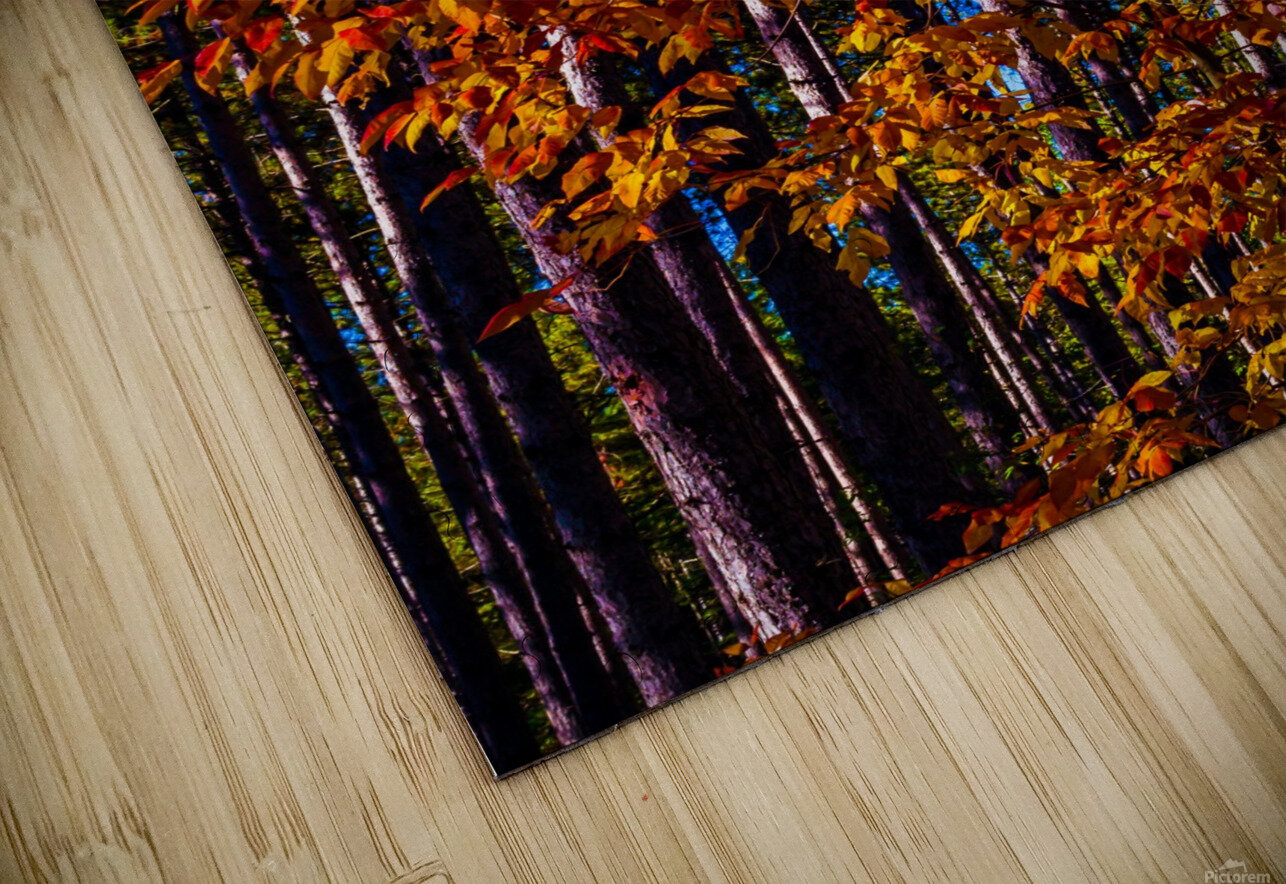 Autumn Fire HD Sublimation Metal print