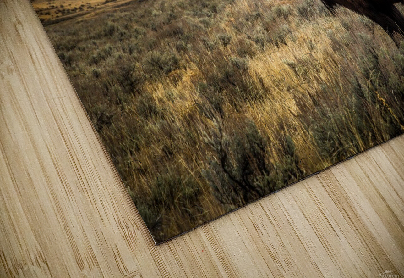 Stormy Bison HD Sublimation Metal print