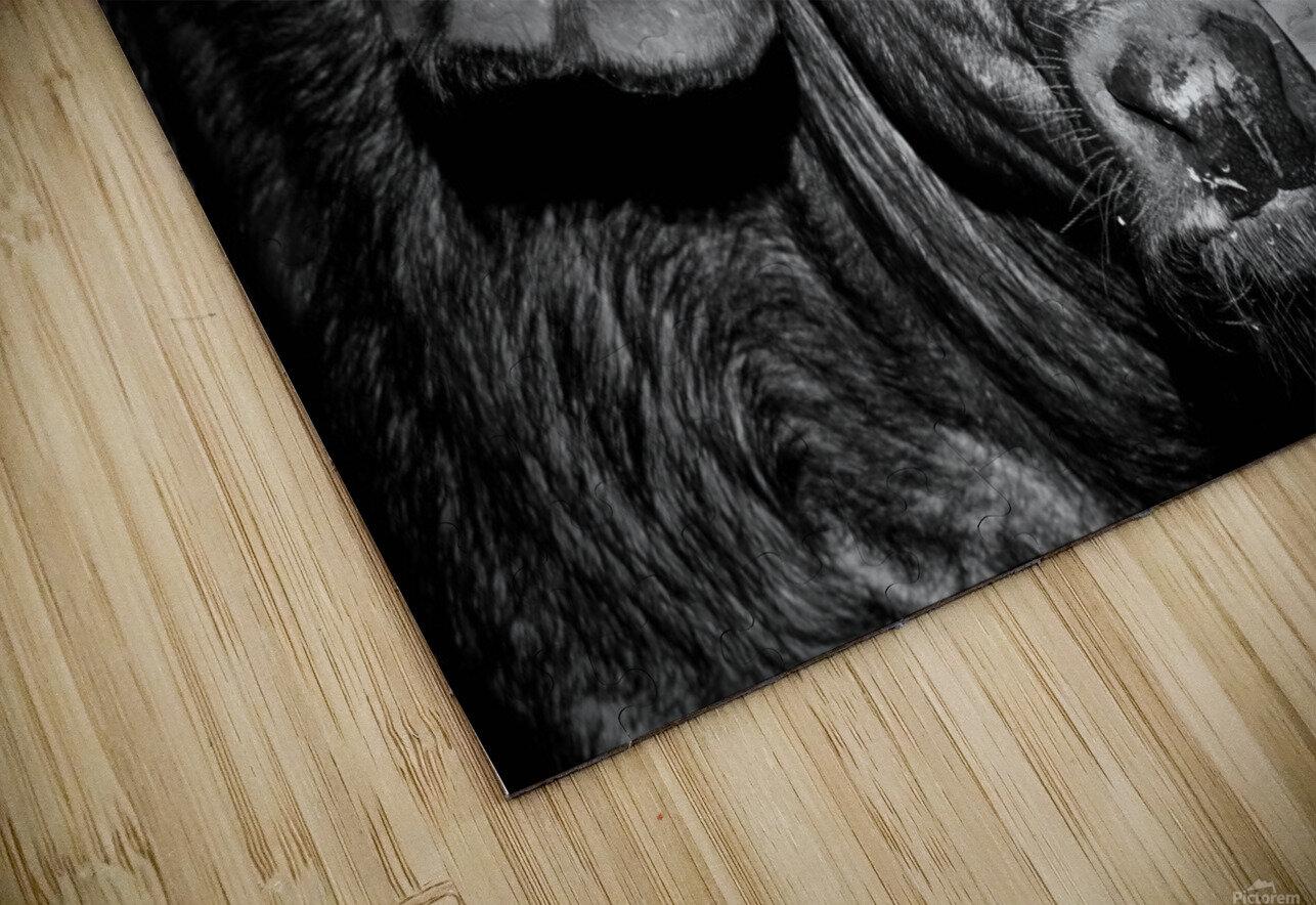 AdriaanPrinsloo 17077 HD Sublimation Metal print