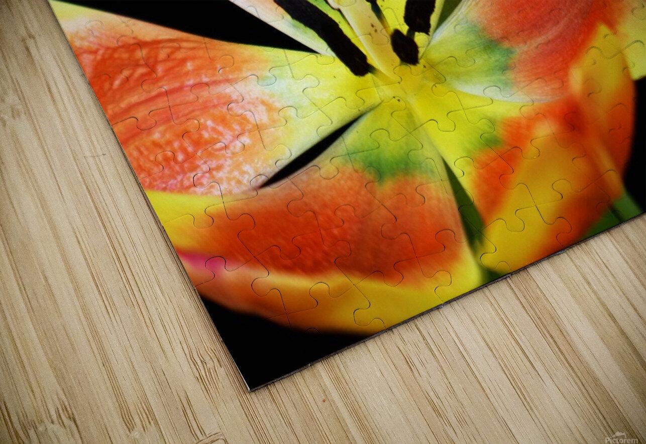 Tulip 1 HD Sublimation Metal print