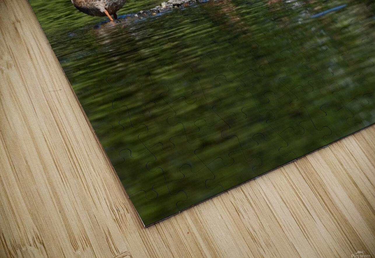 What the duck Impression de sublimation métal HD