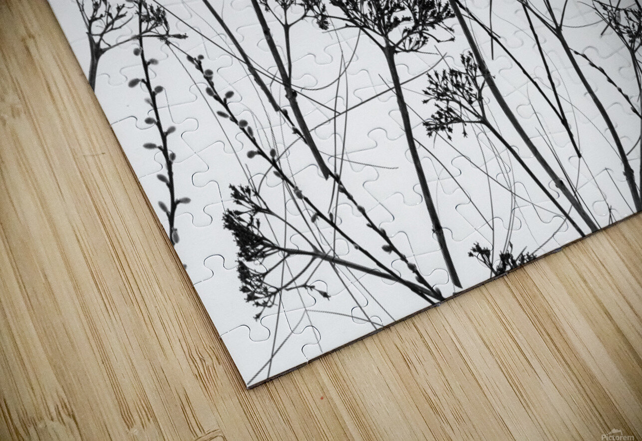 Silhouette of dried plants HD Sublimation Metal print