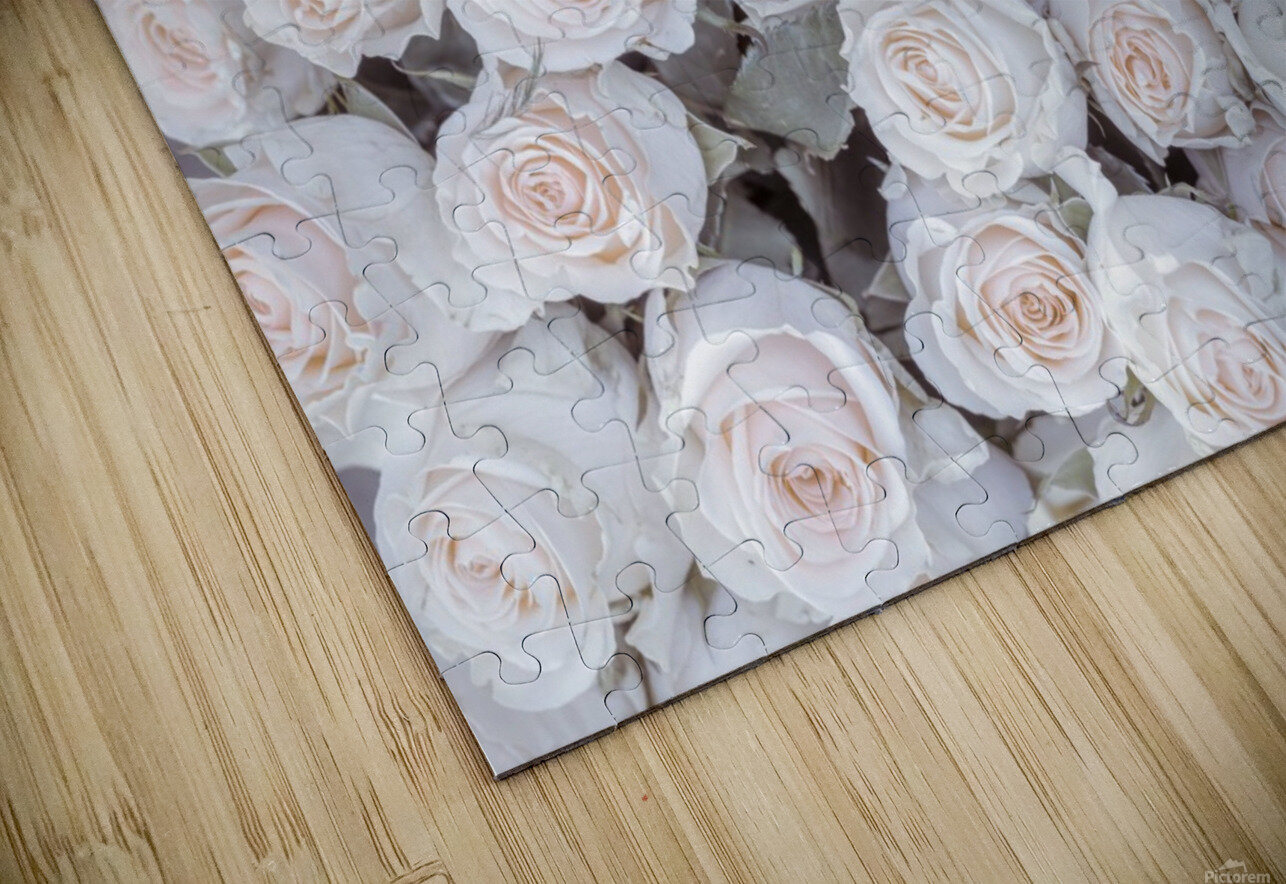 Full frame of Roses HD Sublimation Metal print