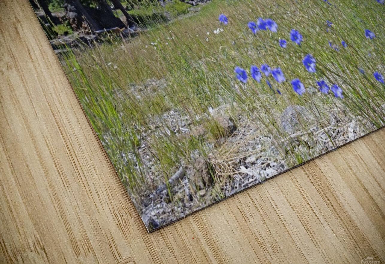 Sierra Nevada in Spring 7 of 8 HD Sublimation Metal print