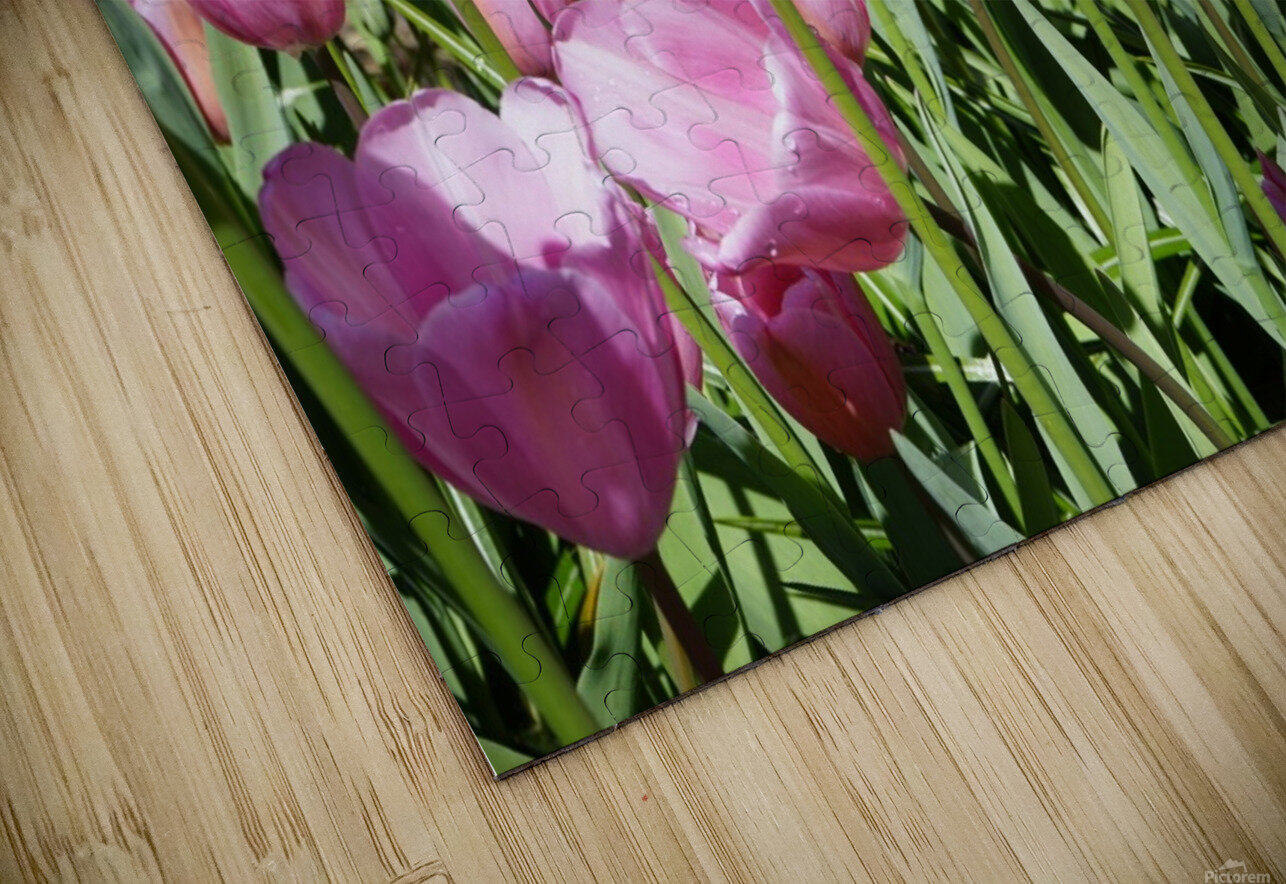Spring Blooms of Holland 5 of 8 HD Sublimation Metal print