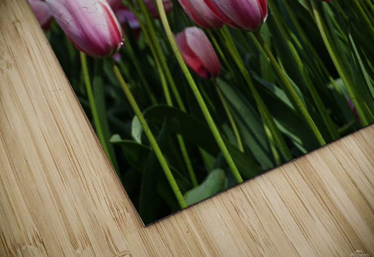 Pink & White HD Sublimation Metal print