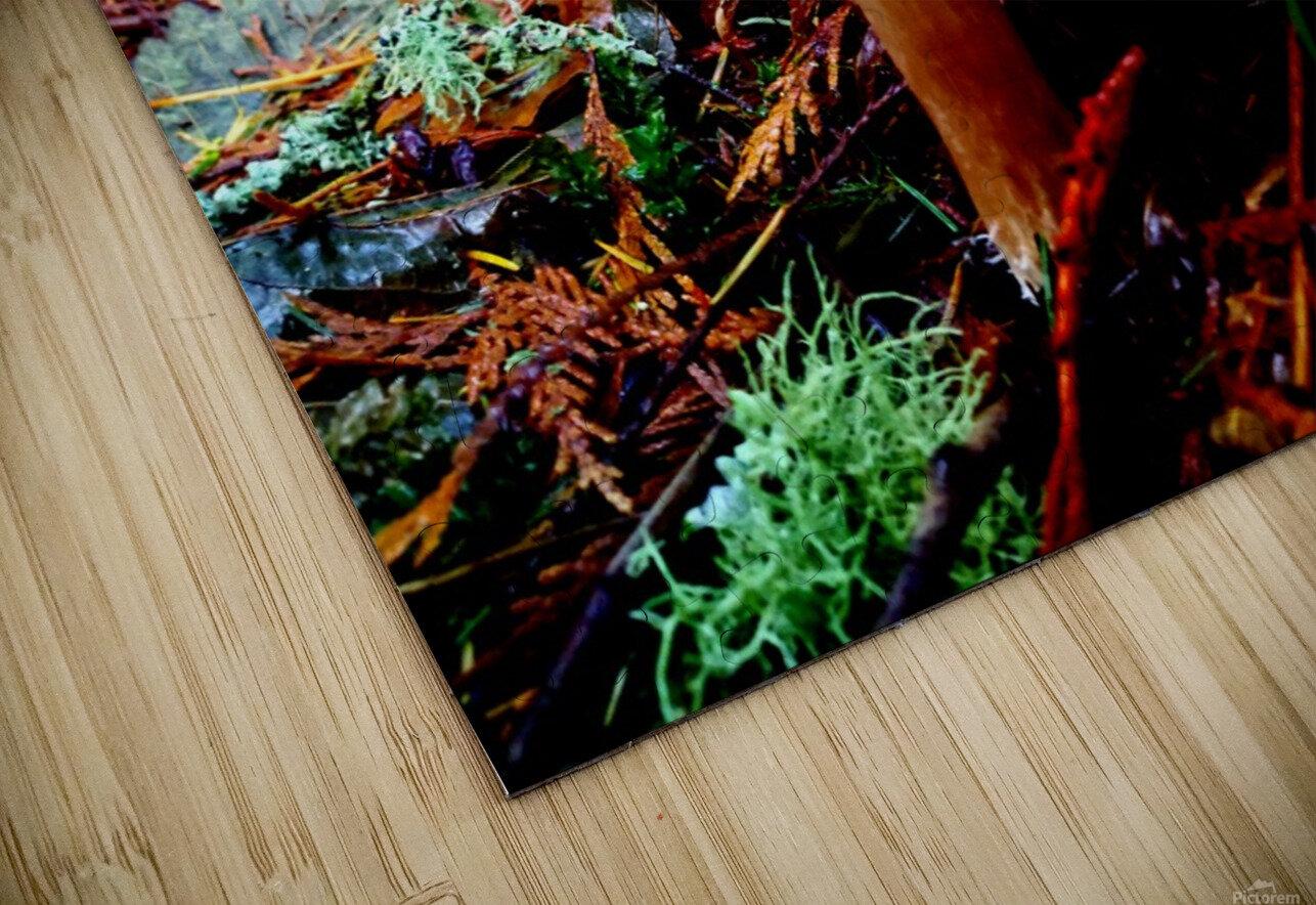 Tiny World 4 of 8 - Mushrooms and Fungi HD Sublimation Metal print