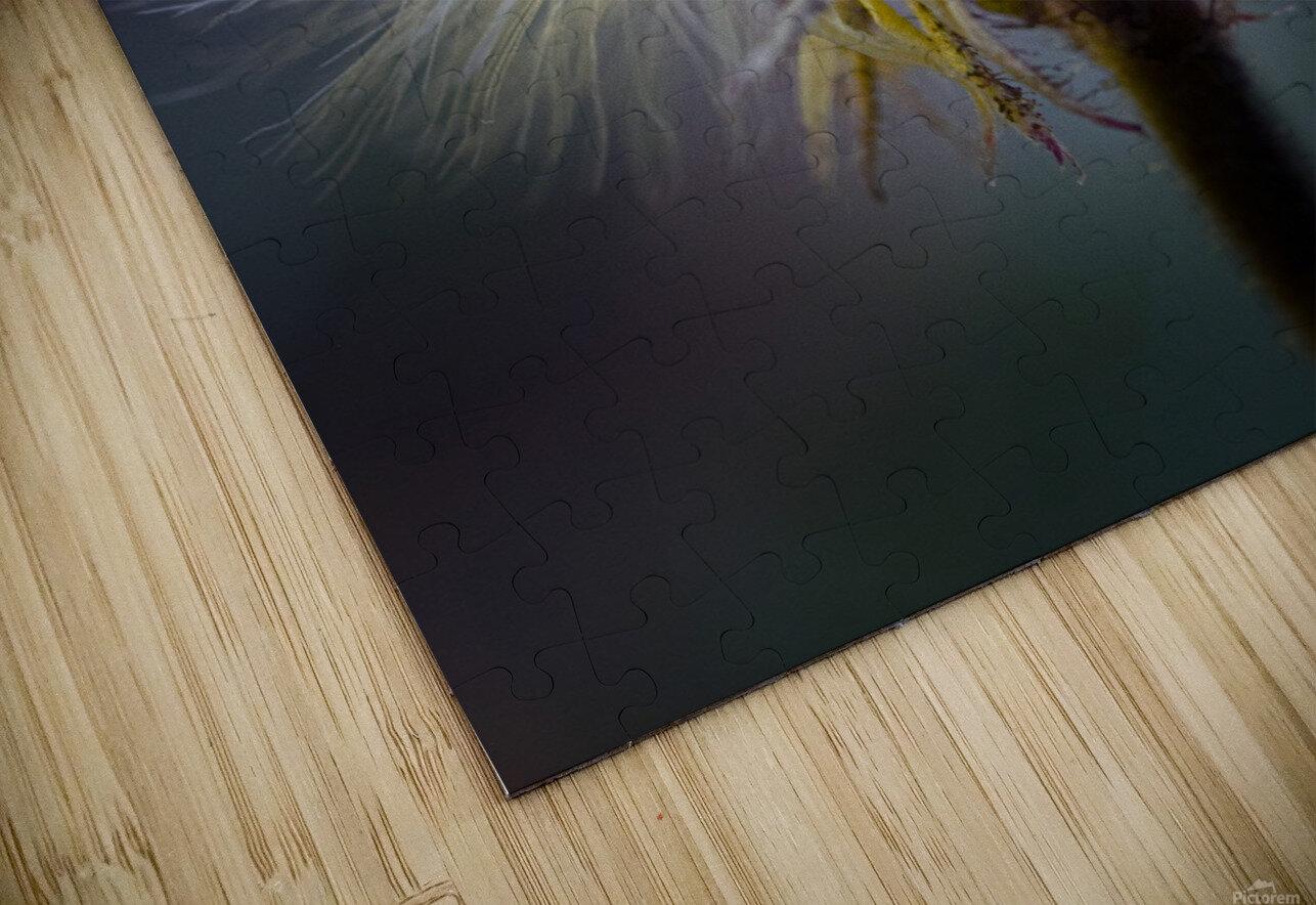 Cheveux d ange HD Sublimation Metal print