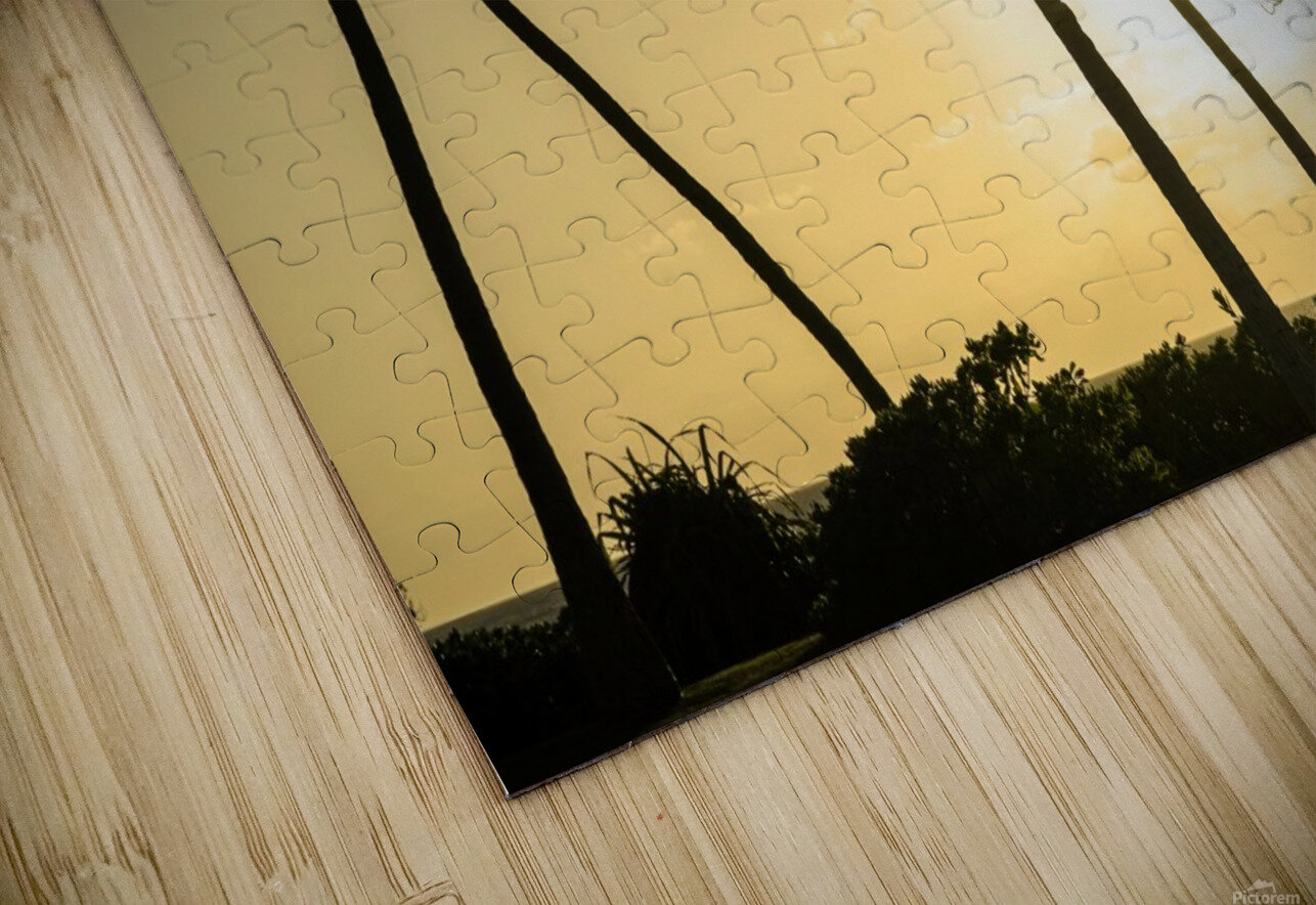 Through the Palms HD Sublimation Metal print