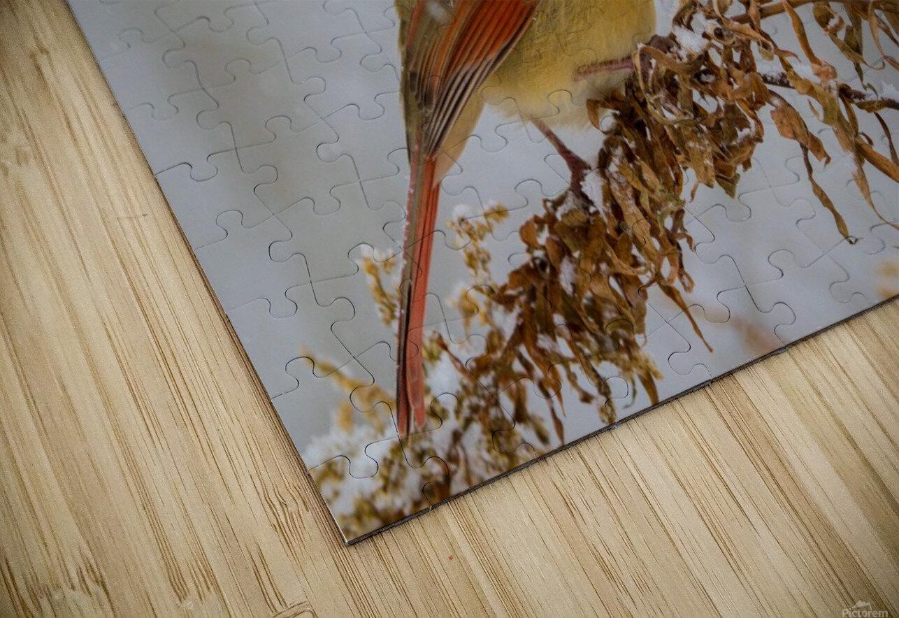 Cardinal ap 1726 HD Sublimation Metal print